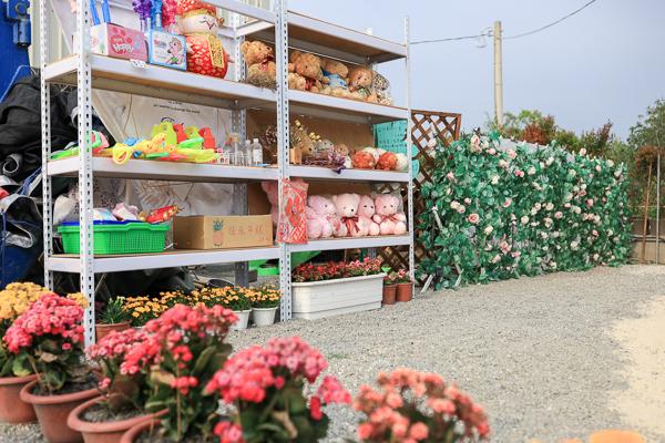 彰化社頭之美園藝紫戀薰衣草和金魚花海好夢幻,兒童遊戲區好好玩