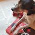 9 animais literários marcantes