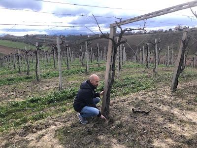 unconvenzional wine vini naturali