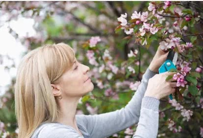 Pruning Deciduous Organic product Trees