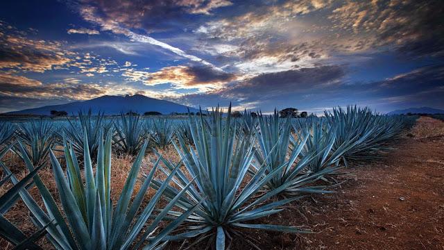 El nombre de Tequila proviene de la palabra náhuatl Tekilan, (Lugar de los trabajadores). Es un «pueblo mágico». Tequila es conocido por darle su nombre al tequila, al ser uno de los territorios donde éste se produce.