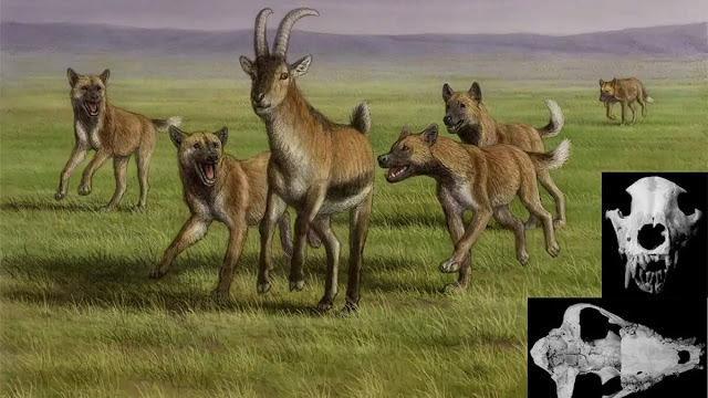 Remains suggest wild hunting dogs arrived in Europe more than 1.7 million years ago