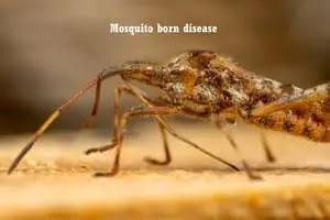 Vector-born diseases