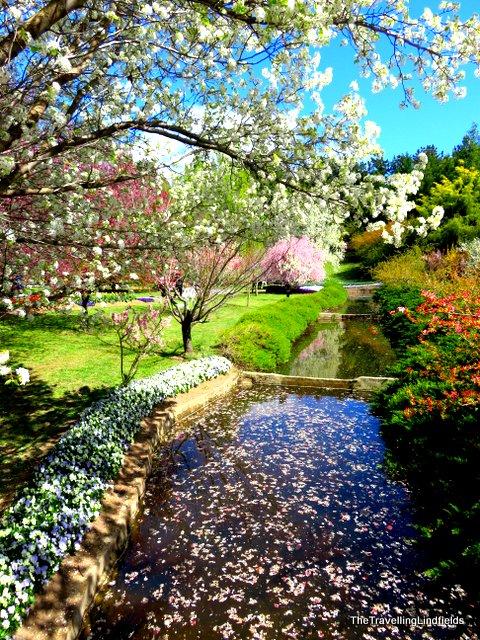 Tulip Top Gardens