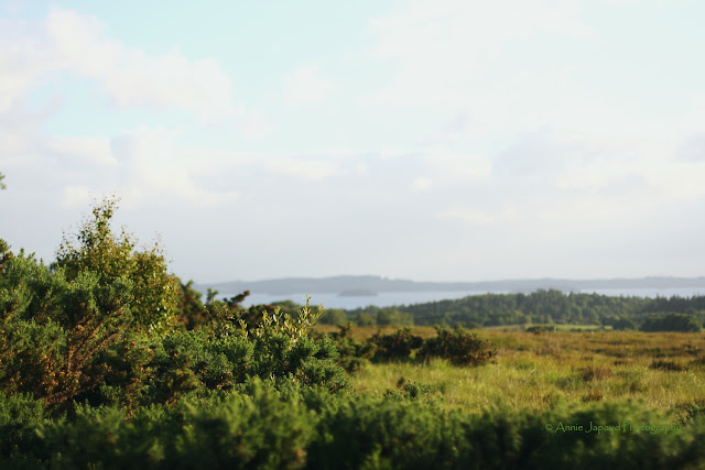 Gorgeous Connemara landscape