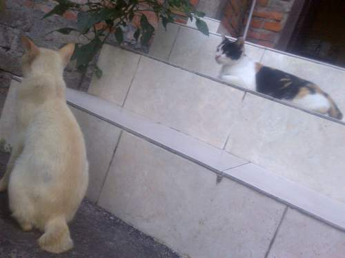 Nama Nama Kucing Lucu Dan Unik Inisial A Z Jantan Betina Informasi Tentang Kucing