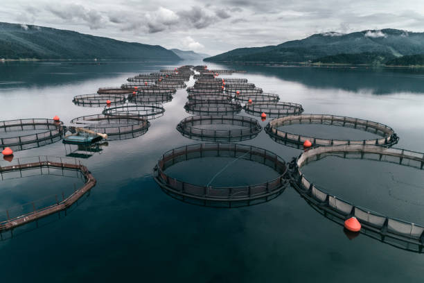 Aquaculture – The Part it Plays in Feeding the World