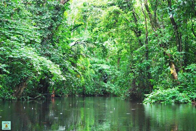Canales en el Parque Nacional de Tortuguero, Costa Rica