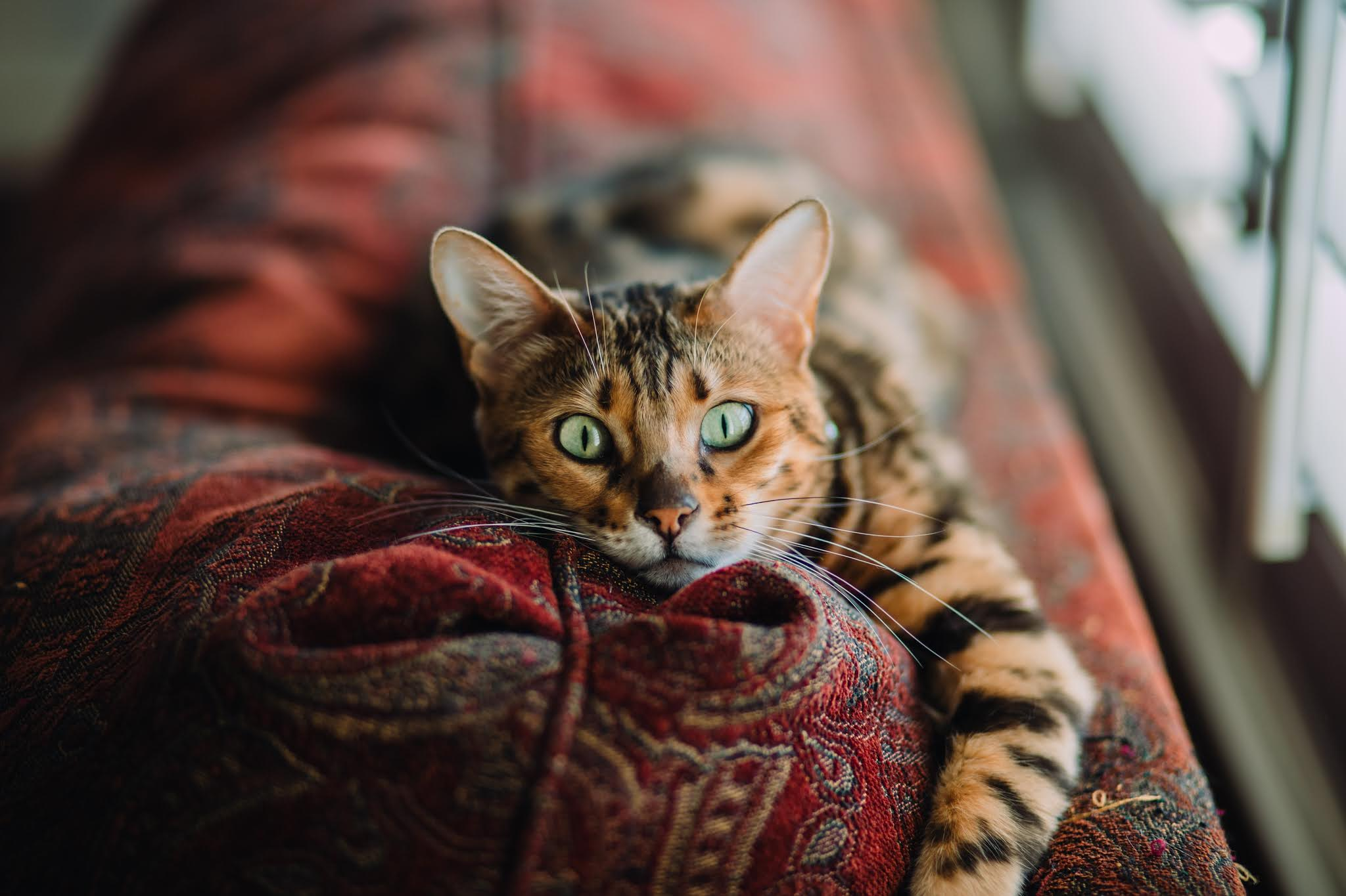some Keys to proper care for your pet cat