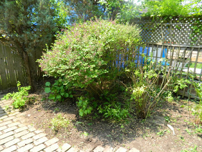 Wychwood Toronto Backyard Spring Cleanup After by Paul Jung Gardening Services--a Toronto Gardening Services Company