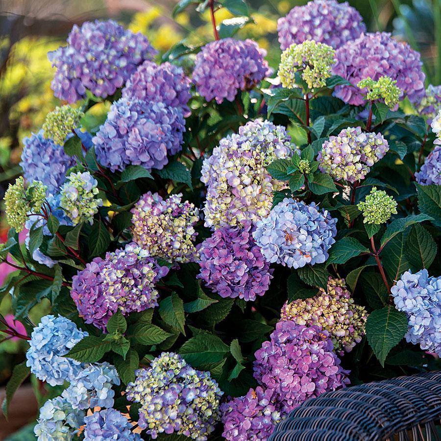 القرطاسية أجمل النبتات المنزلية وكيفية إكثارها والأعتناء بها