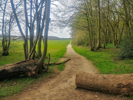 Cutting through How Wood on Graveley bridleway 5