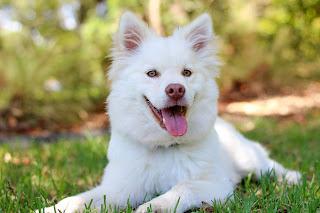Dog Names meaning loyal and faithful