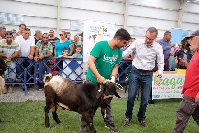 Fuerteventura.- Feaga 2019 : Un macho cabrío joven de la ganadería de Francisco Sosa Pérez y otro adulto de Blas Alonso Viera ganan el concurso morfológico