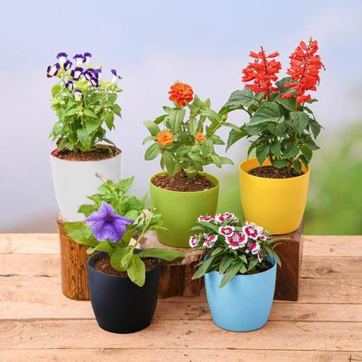 Nurserylive free plants with color pots