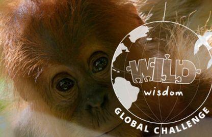 Wild Wisdom Global Challenge 2021