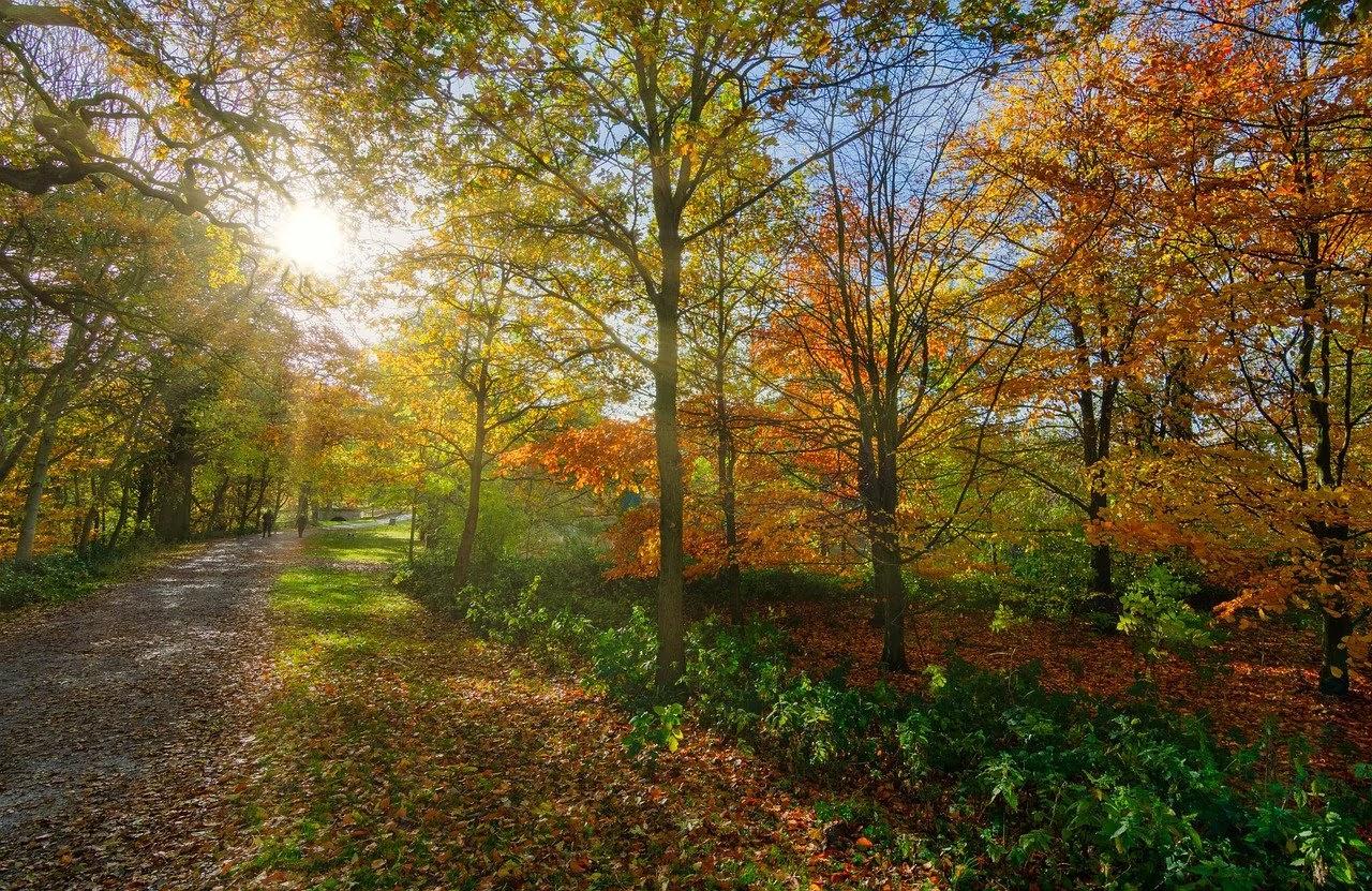 طريق اخضر يحاوطه الاشجار العملاقة من كل مكان ويمر رجلان