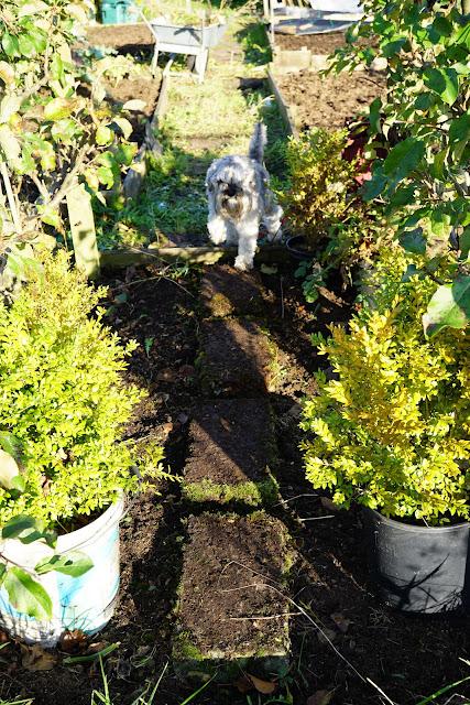the tree path- A Stubborn Optimist - an ecotherapy blog - C.Gault 2019