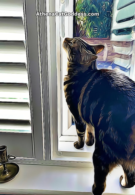 tabby cat on window sill