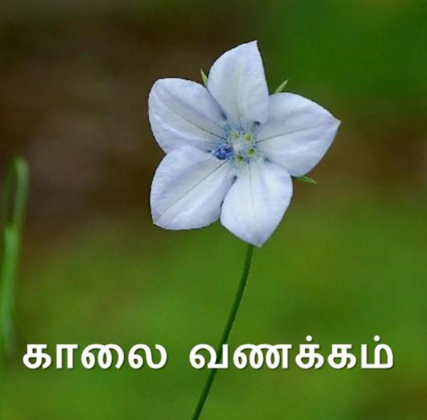 Tamil Good Morning Images | காலை வணக்கம் | good morning in tamil, quotes ,vanakkam images , positive good morning , wishes , kalai vanakkam, baby good morning , god love image for whatsapp and facebook