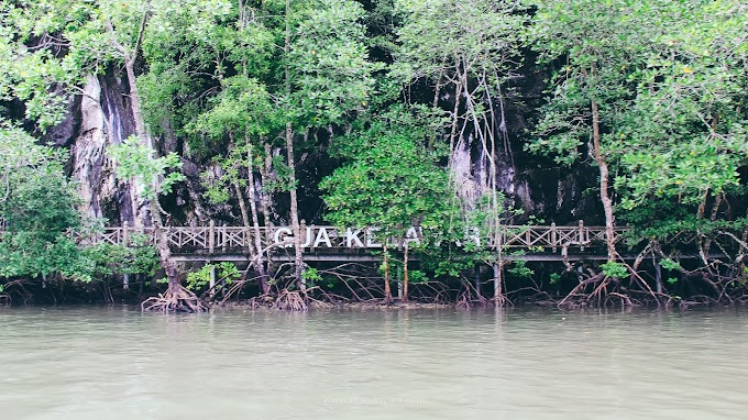 Kilim Geoforest Park, Langkawi (3)