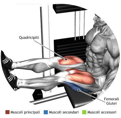 Seated Leg Extensions
