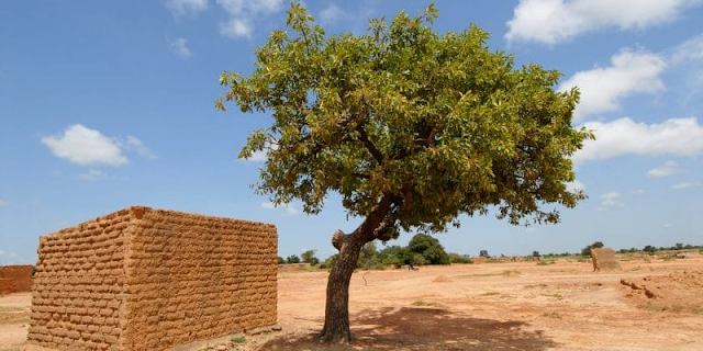 MALI: Government strengthens shea park with 8,400 additional plants