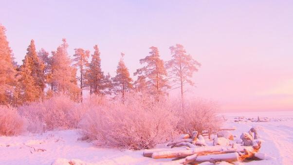 Desktop HD Wallpaper Winter Trees Snow Drifts Logs In Light