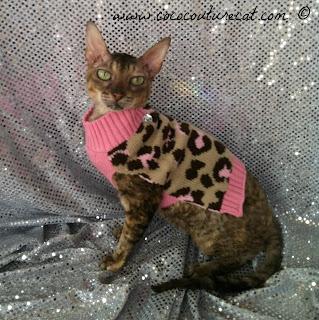 Coco the Cornish Rex cat in pink leopard print sweater