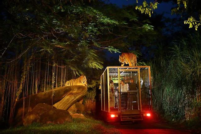 Bali Zoo sebagai Tempat Wisata Malam di Bali