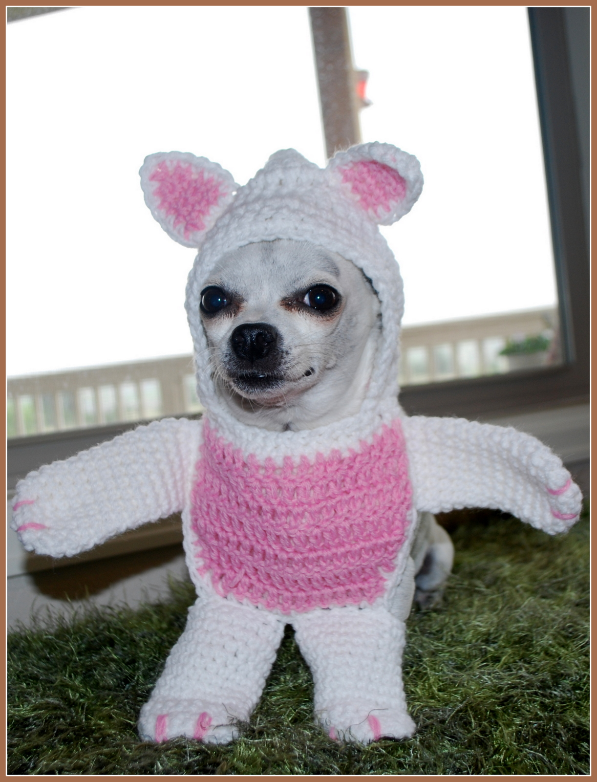 Cuddly Teddy Bear Costume! Or a cute little bunny. & Posh Pooch Designs Dog Clothes: Walking Bear Dog Costume Crochet ...