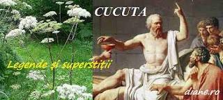Cucuta în legende și superstiții