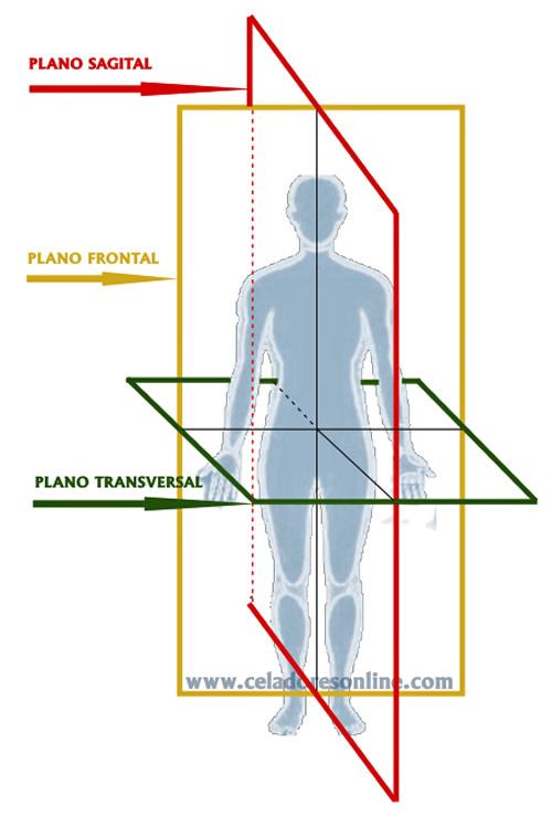 Ejes del cuerpo humano