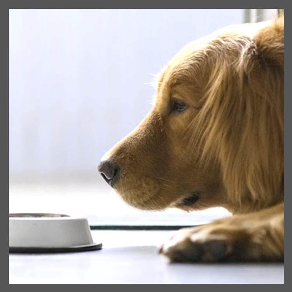 狗狗營養便利計算機