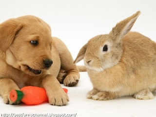 Rabbit and puppy.