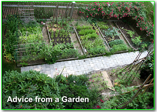 http://www.abetterfutureforyou.info/article/advice-from-a-garden?sabrina