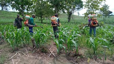 TNI Lakukan penyemprotan bersama Petani