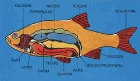 Vissen Limousin