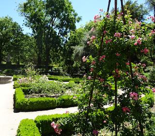 una de las pocas plantas no resecas en el Jardín Botánico