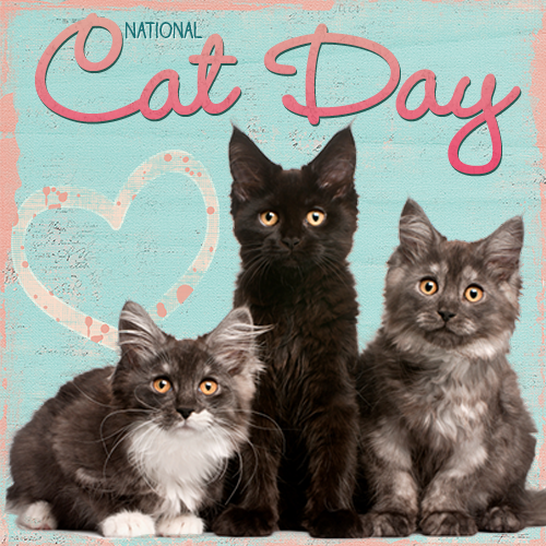 National Cat Day Wishes Sweet Images