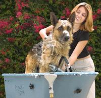perro tomando un baño al aire libre
