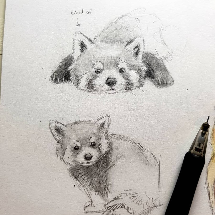 02-Tiered-red-panda-Kleevia-www-designstack-co