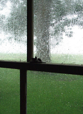 Listen to white noise, such as a recording of a rainy day, to eliminate distractions when reading or writing.