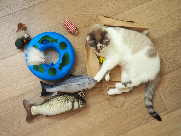 fish-shaped cat toys