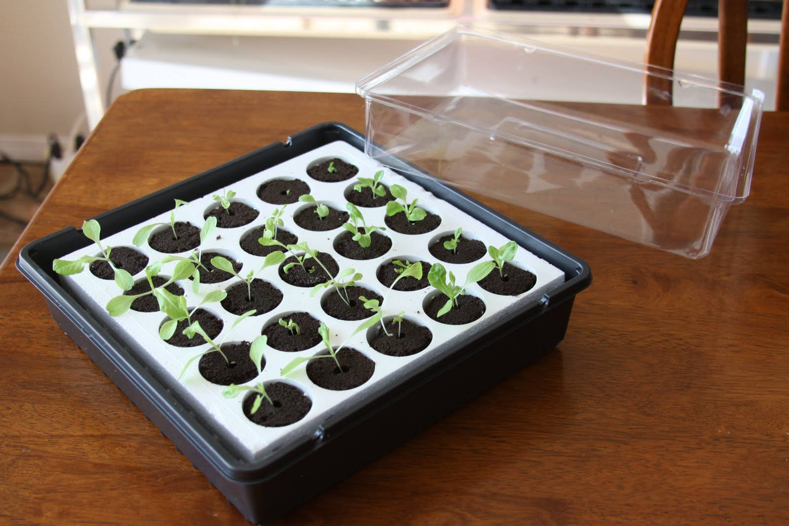 Seed Starter Kit with Cover
