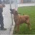 Cadela deixada em canil vê os donos voltarem para levarem outro cão