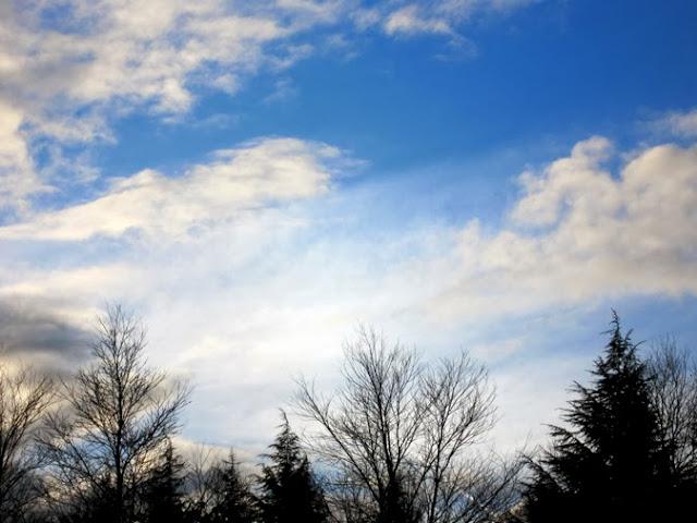 冬木立と冬空