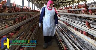 Khofifah Pastikan Telur yang Beredar di Jawa Timur Aman Dikonsumsi