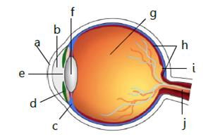 mata alat optik