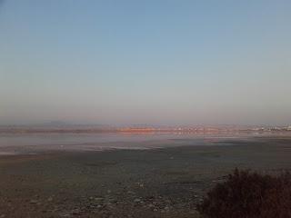 Larnaka Salt Lake after some November rain